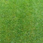 Turf-Type Tall Fescue Seed / Fine Fescues