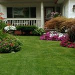 How to Establish a New Lawn